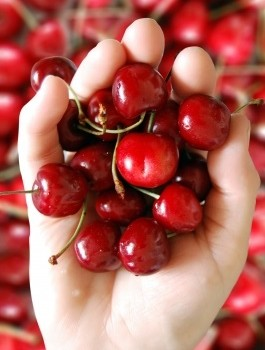 ID-10017466 Picture of Cherries by graur razvan ionut